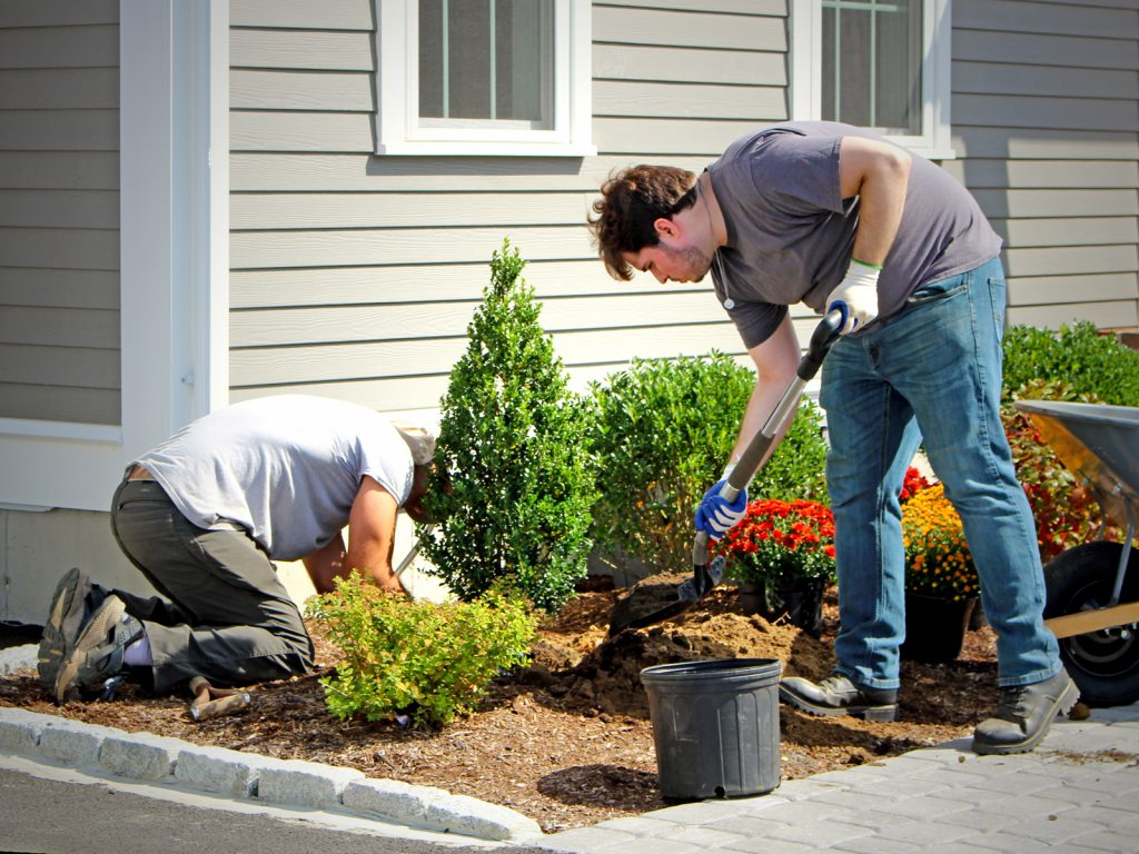 James and Nick planting a shrub